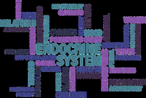 Anatomie & Physiologie: Das Endokrinsystem Teil II | keto-gen.de ...