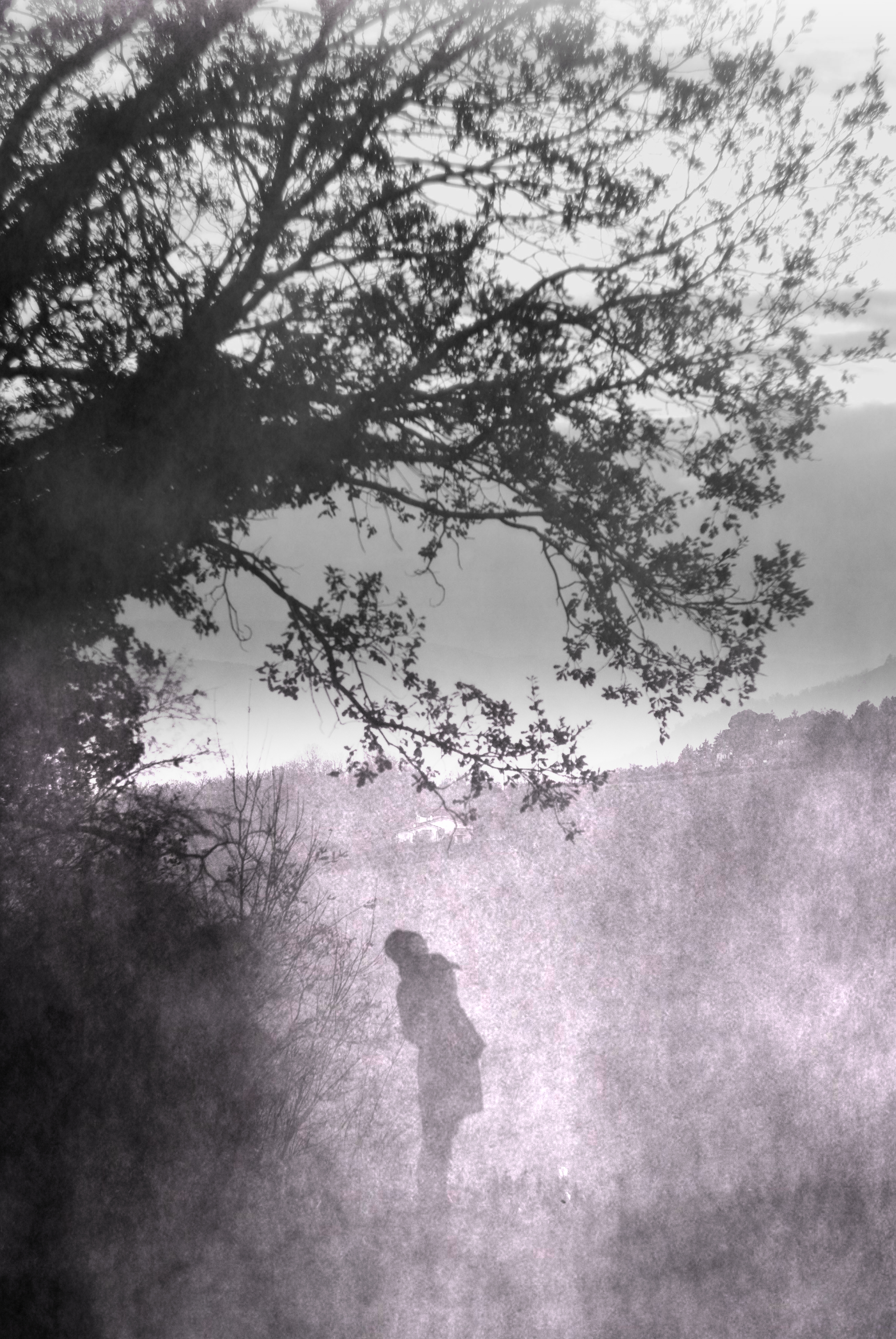 chiara_boschi_foggy_tree