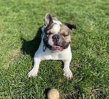Boodge Tennis ball.jpg
