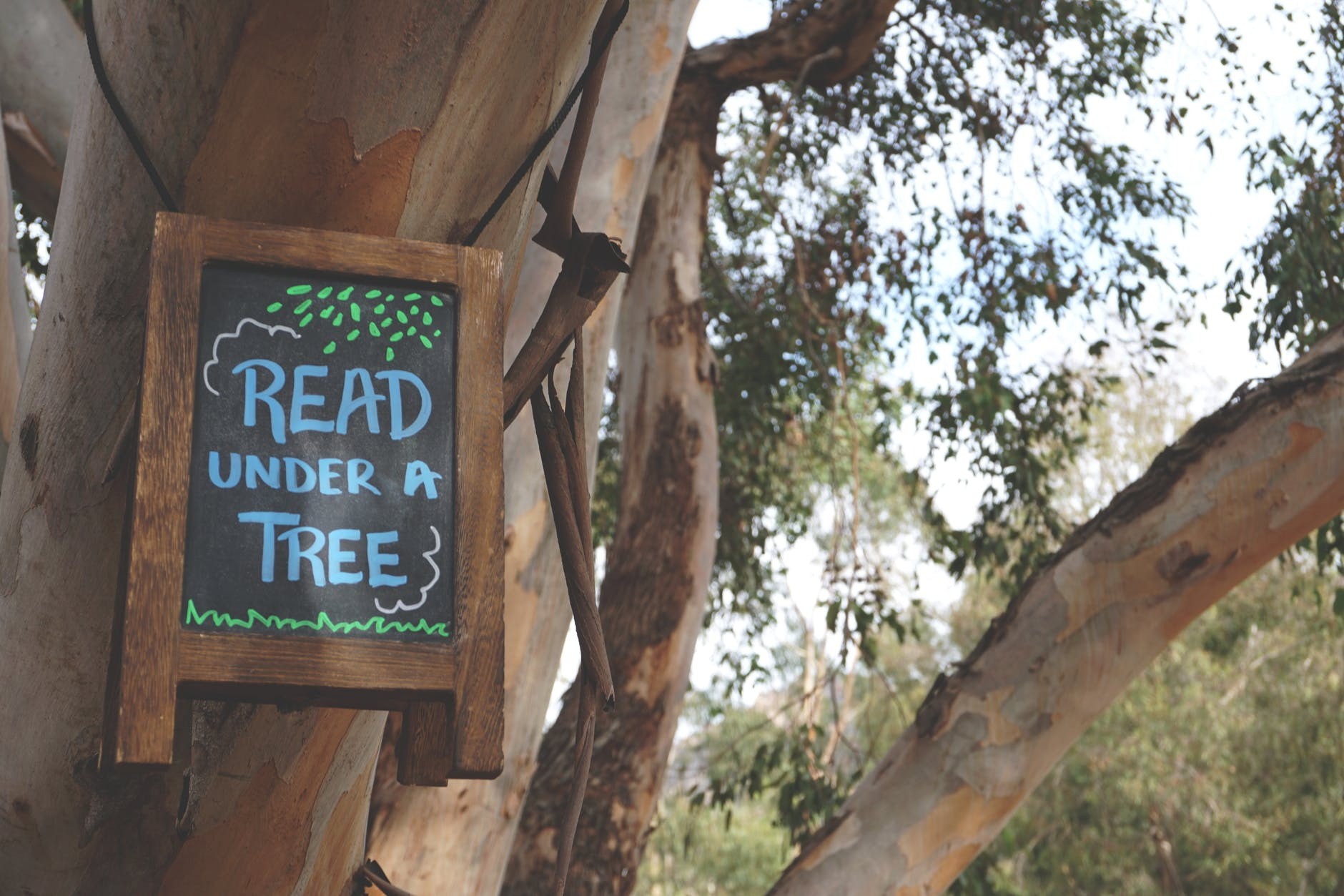 read under a tree