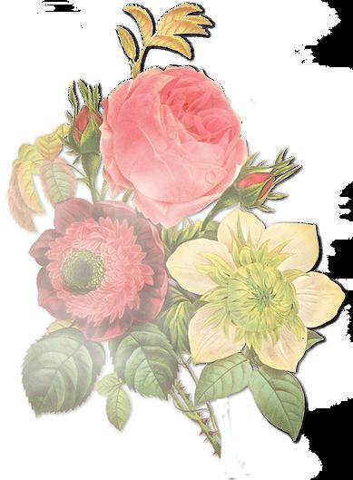 Flower Illustration_edited.png
