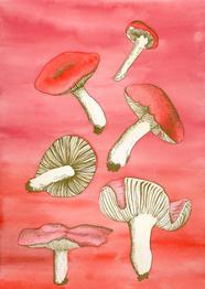 Mushrooms, 2021