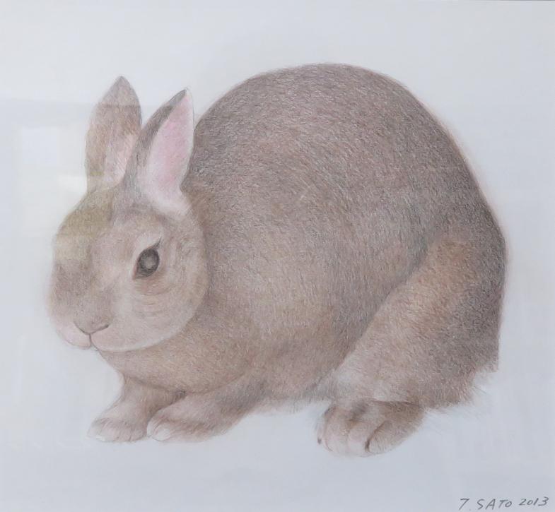 rabbitporon