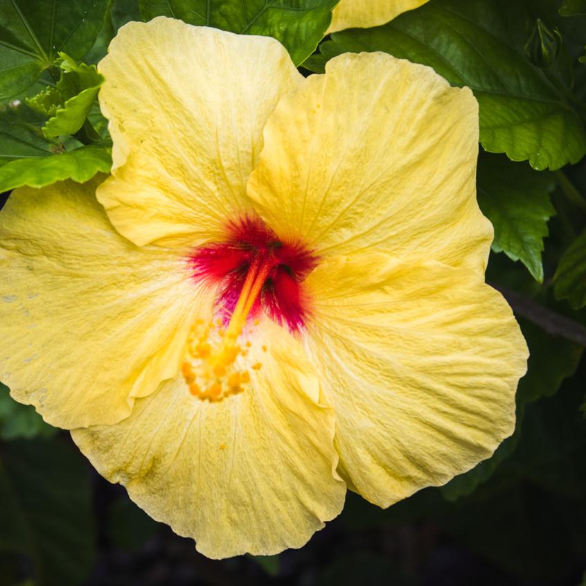 Hawaii20-25-001
