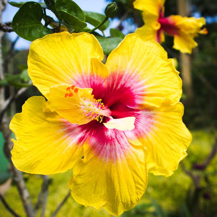 Hawaii20-25-019