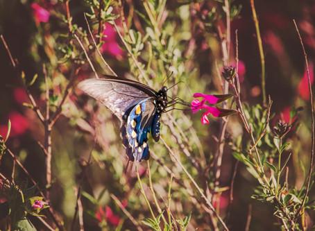 Butterfly..Butterfly