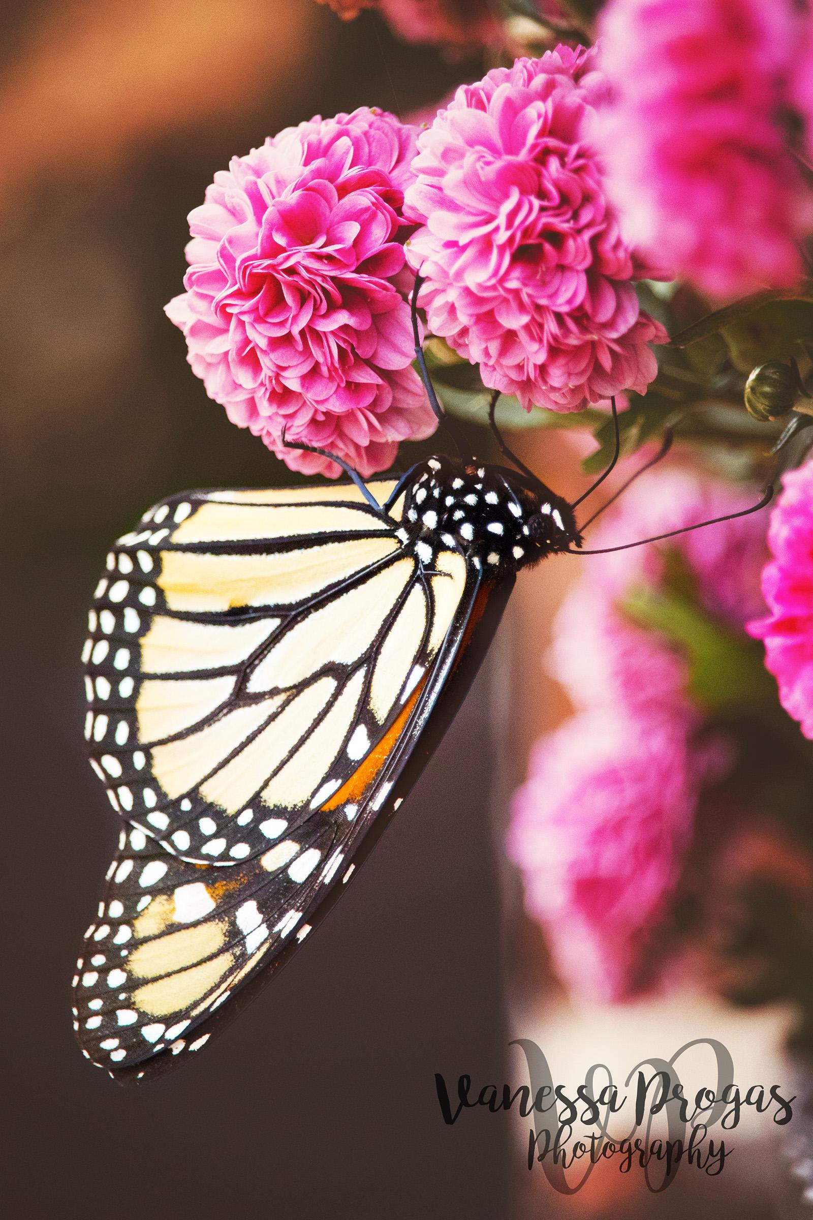 Butterfly - 7