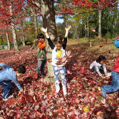 Fall leaves at ECC