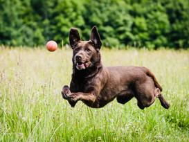dog chasing ball.jpg
