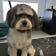 Dog on grooming table
