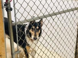 dog in boarding kennel.jpg