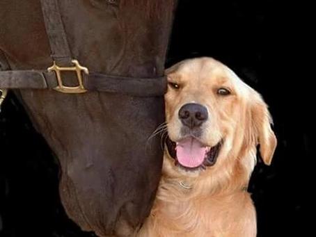 6 waardevolle tips voor de kennismaking tussen hond en paard