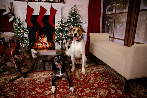 pet portrait two dogs in a christmas scene with fireplace