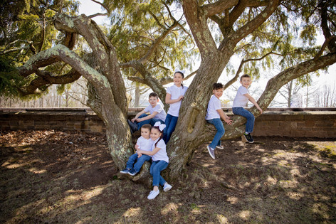 family shoot outside with everyone sitting in a tree