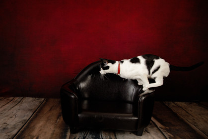 Black and white cat mid jump on a small black couch