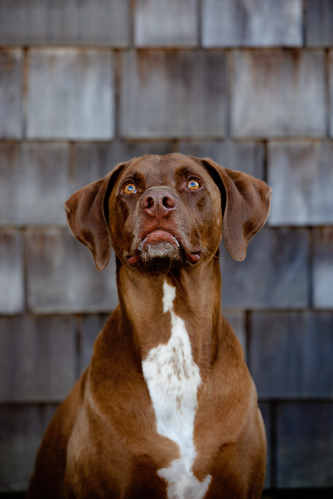 brown dog in front of wood siding