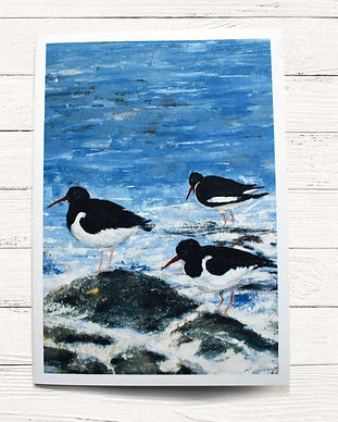 A6 card- oystercatcher.jpg