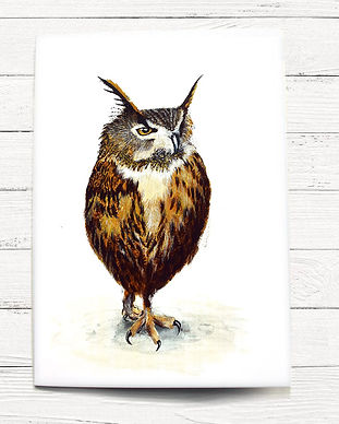 A6 card-long eared owl.jpg