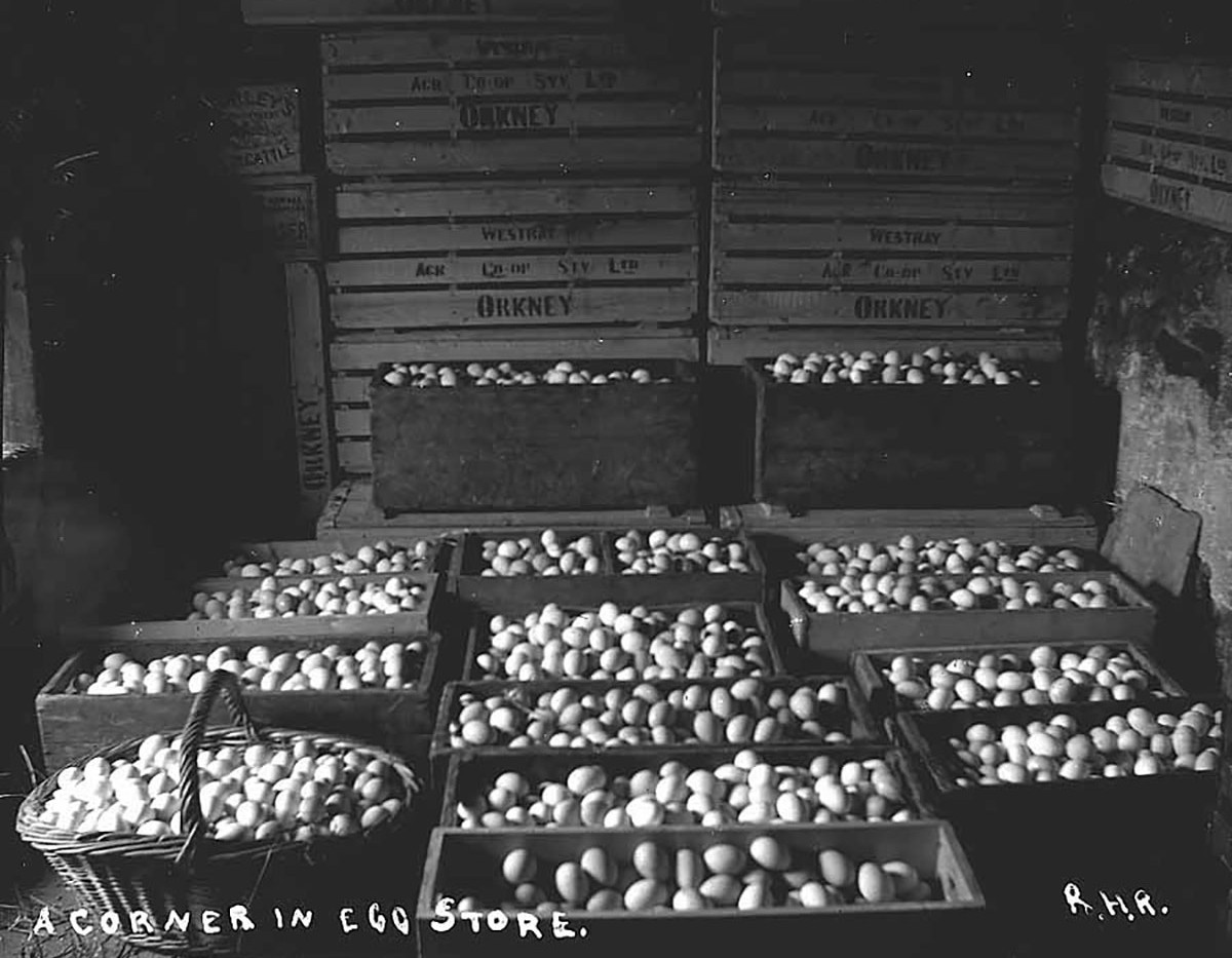 Egg boxes in Orkney