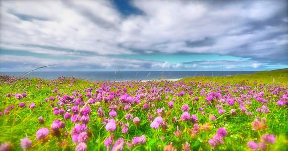 Field of dreams, Barvas.jpg