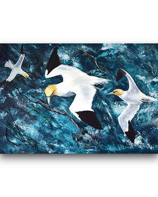 portfolio-paint-gannets.jpg