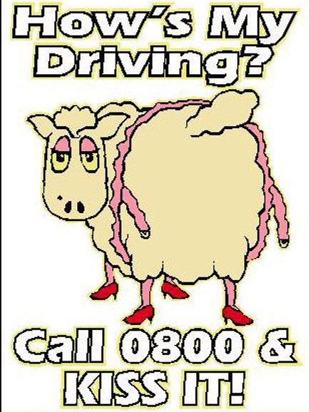 SH24 How's My Driving? Call 0800 & Kiss It! Window Sticker