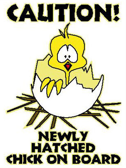 MA28 Caution! Newly Hatched Chick On board! Window Sticker