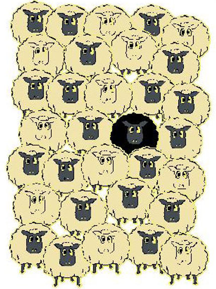 SH37 Black Sheep Window Sticker