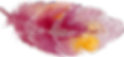 feather2_0005_Layer-6.png