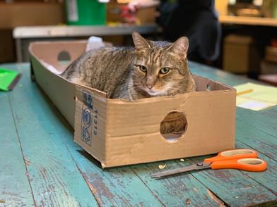 Shop cat Fred in a box
