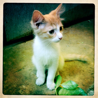 Baby Simon the shop cat