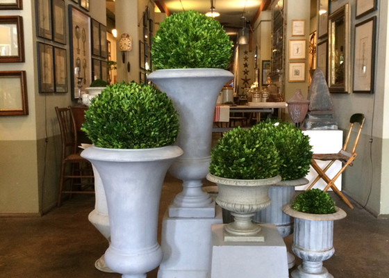 Multiple pedestal urns with boxwood balls