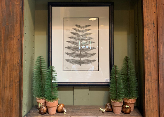 bottle brush trees in clay pots with fern print in background