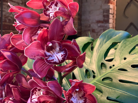 Orchids and Monsterra leaf
