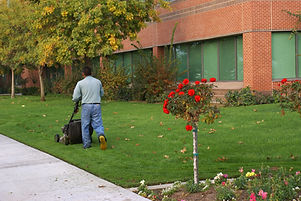 Gardener uses rotary mower on lawn of co
