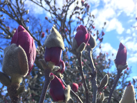 March Newsletter: Spring Cleaning, the Ayurvedic Way