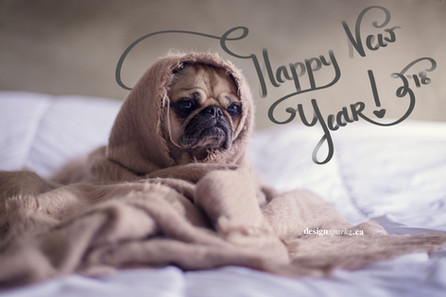 New Year, New Dog?