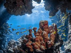 Récifs coralliens Mer Rouge