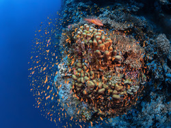 Elphinstone Mer Rouge