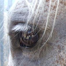 horse eye 3.JPG