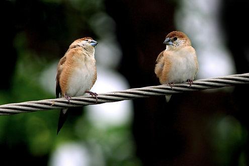 TwoBirds.jpg