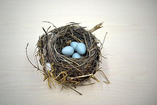 EggsInNest.jpg