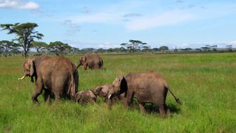 Africa 1_Elephant 2.JPG