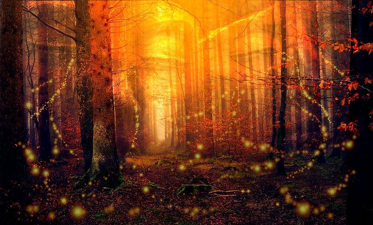 forest-3686097_1920.jpg