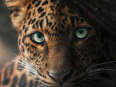 Tyger ! Tyger ! burning bright In the forests of the night, What immortal hand or eye