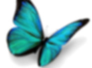 transparent-butterfly-flying-right.jpg