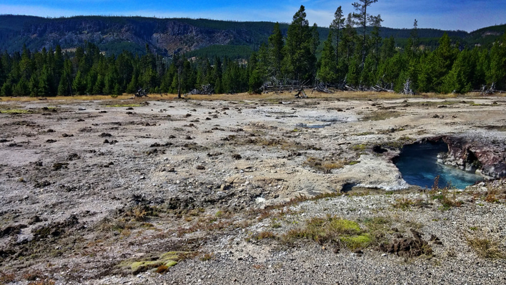 Bison poo piles, Biscuit Basin, Yellowstone National Park , Wyoming