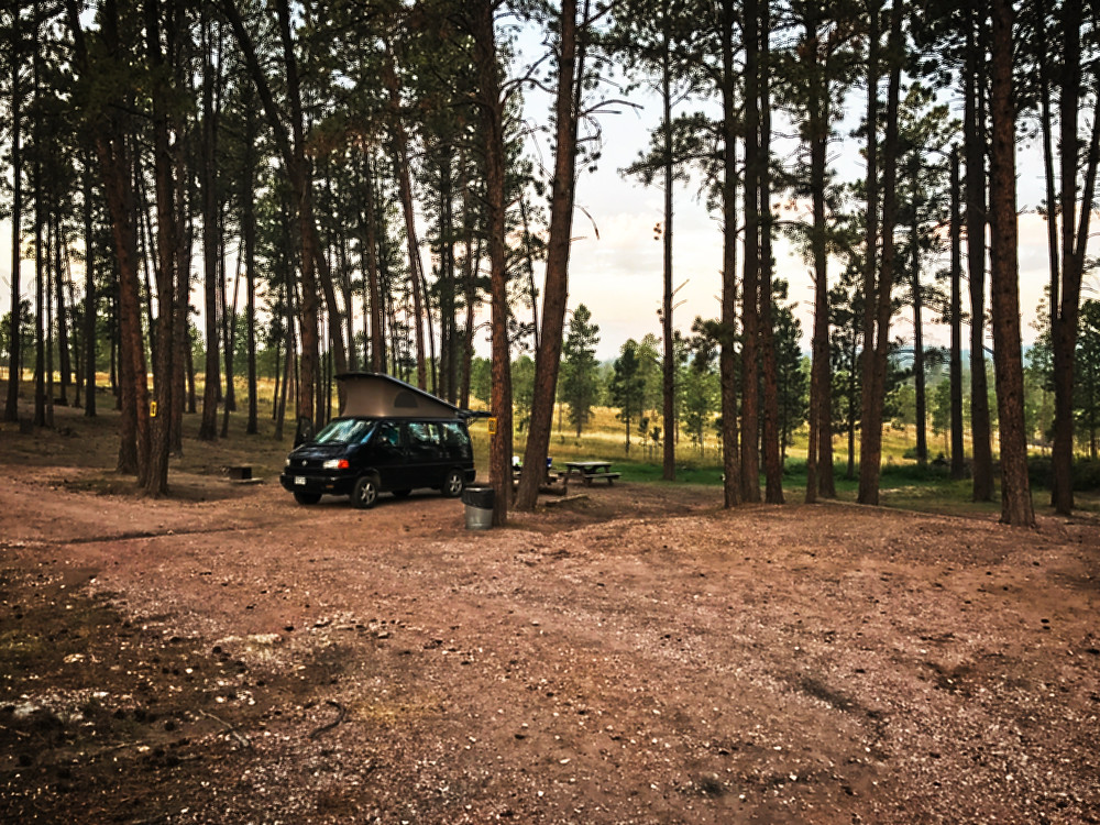 Camp spot among pines, Big Pine Campground, South Dakota