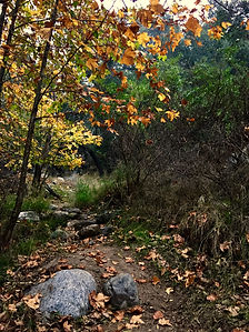 Millard Canyon.jpg