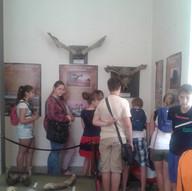Палеонтологическая выставка в музее Сарепты